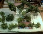 Copaceii din gradina mea